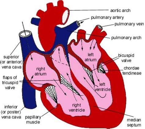 Aqua biology essay causes of diseases